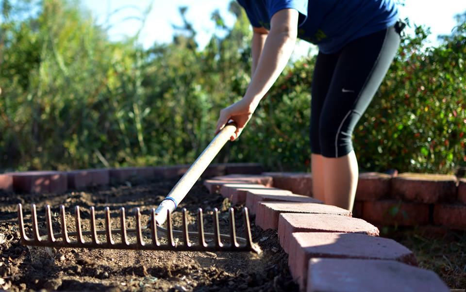 Raking soil before seeds are placed.jpg